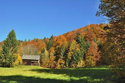 Autumn, Autumn Mood, Nature, Golden Autumn