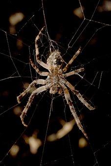 Spider, Night, Macro, Gloomy, Weird