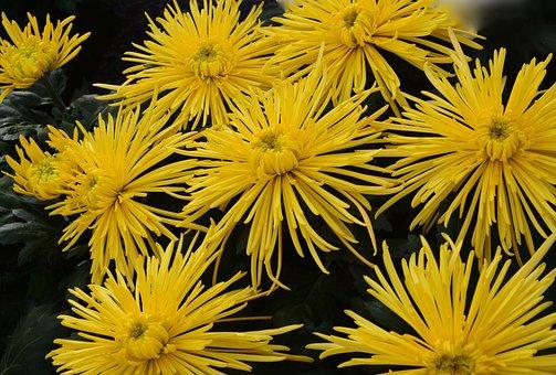 Yellow Flowers, Massif, Bouquet, Parterre