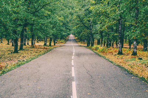 Road, Forest, Autumn, Landscape, Greece, Foloi