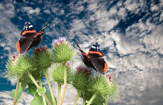 Butterflies, Nature, Animals, Summer, Spring