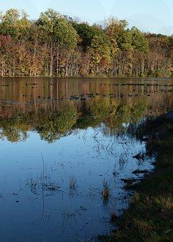 Towhee Lake, Towhee, Pennsylvania, Water Lilies, Autumn