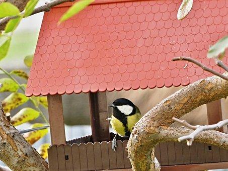 Little Bird, Tit, Bird, House, Garden, Tree