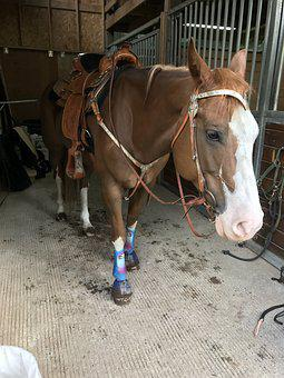 Horse, Western, Bridle, Mare, Animal, Ranch, Cowboy