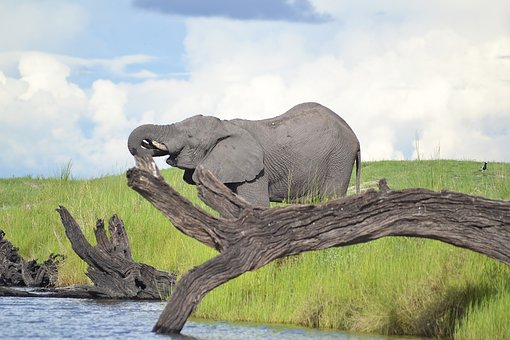 Wildlife, Elephant, Botswana