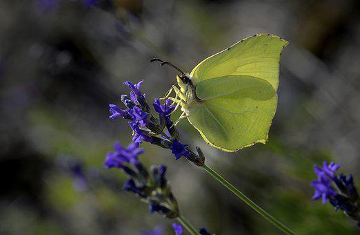 Butterfly, Wings, Flight, Nature, Insect, Life, Field