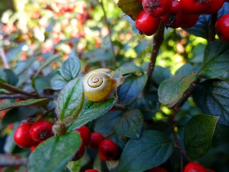 Snail, Plant, Bill Berry, Nature, Shell, Animal, Green