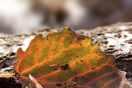 Autumn, Tree, Lying, Birch, Leaf, Aspen, Colored