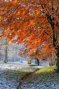 Nature, Seasons, Autumn, Fall, Colorful, Forest