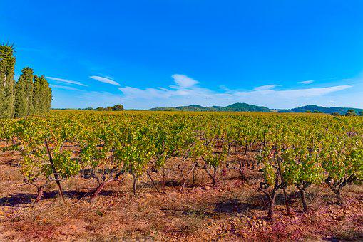 Vines, Fall, Vineyard, Color, Beaucaire, Red