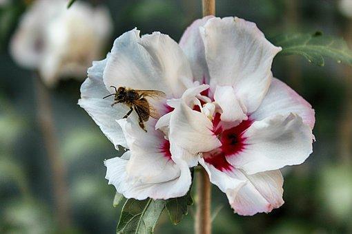 Flower, Bee, Pollination, Blossom, Bloom, Macro, Nature