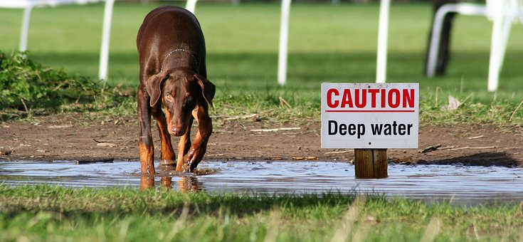 Dog, Water, Sign, Caution