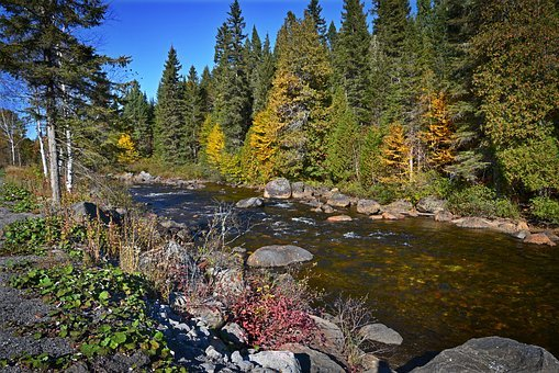 Autumn Landscape, River, Fall, Tree, Landscape