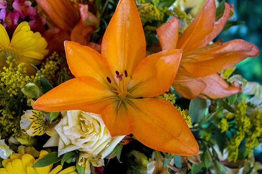 Flower, Nature, Green, Garden, Plant, Flowers, Beauty