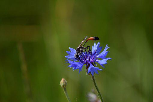 Grass, Osa, The Petals, Blooms, Green, Macro, Summer