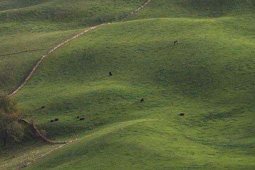 Meadow, Cows, Pasture, Bird's Eye View, Landscape