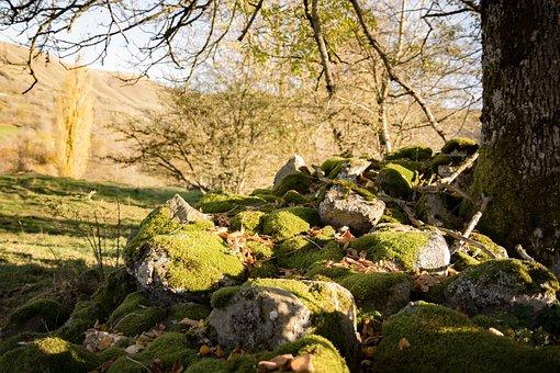 Fall, Tree, Roche, Foam, Nature, Landscape, Leaves