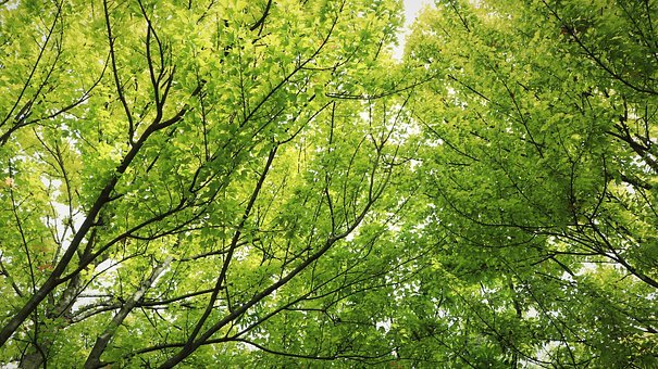 Wood, Trees, Plants, Leaf, Leaves, Wipes, The Leaves