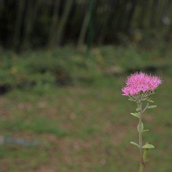 Fine, Little, Delicate, Flowers, Nature