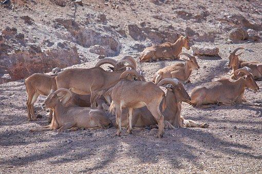Africa, Horns, Mammal, Wild Animal, Safari, Big Game