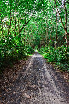 Nature, Pa, The Forests, Tree, Green, Thailand
