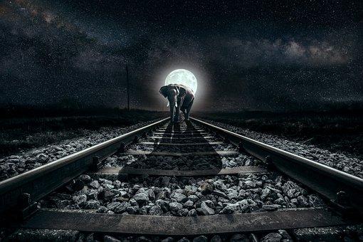Elephant, Seemed, Moon, Night, Full Moon, Railway Rails