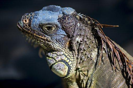 Zoo, Lizard, Wild, Reptile