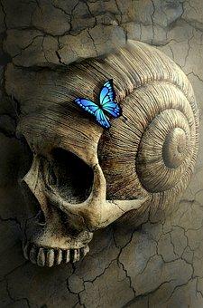 Fantasy, Book Cover, Skull And Crossbones, Snail