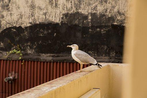 White Bird Seagull, Alive, Animal, Nature, Bird, Wild