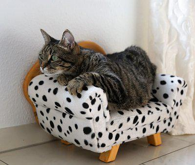Cat, Tiger, Tigerle, Sofa, Couch, Animal, Predator