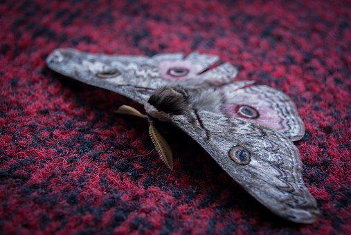Insect, Butterfly, Wing, Fly, Bug, Biology, Nature