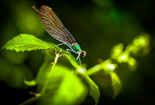 Dragonfly, Insect, Macro, Colors
