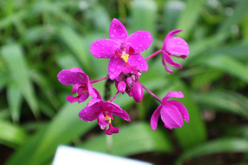 Plant, Ornamental, Kind Of Wood, Orchid