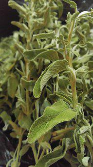 Flora, Medicine, Food, Leaf, Nature, Closeup, Vegetable