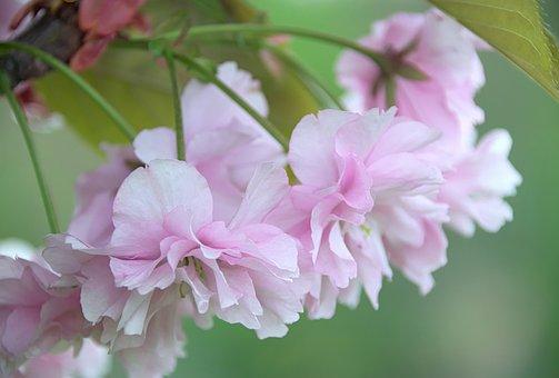 Spring, Flowers, Nature, Macro, White, Sad, Flower
