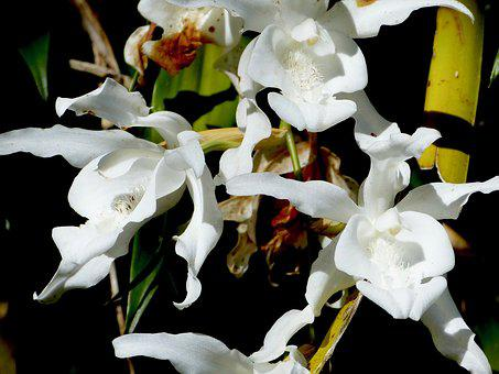 Orchid, Flower, Reunion Island, Nature, Flowers Orchid