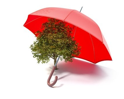 Ecology, Protect, Protection, Safety, Nature, Umbrella