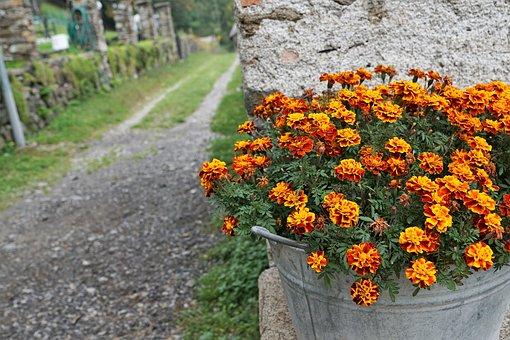 Flowers, Road, Pot, Marigold, Autumn, Summer, Plant