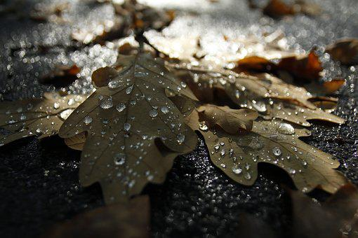 Autumn, Tears, Rosa, Dry Leaves, Sorrow, Farewell