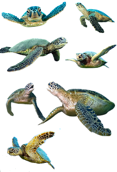 Turtle, Isolated, Water Turtle, Panzer, Tortoise Shell