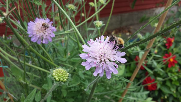 Insect, Garden, Summer, Flower, Floral, Plant, Nature