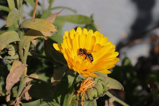 Bee, Miss, Again Hofen