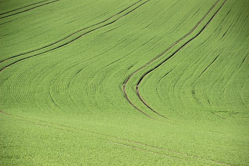 Agriculture, Field, Structure, Green Ways, Growth