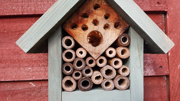 Natural, Bees, Wood, Garden, Nature, Hive, Insect