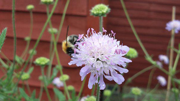 Bee, Garden, Plant, Insect, Pollen, Pollination, Nectar