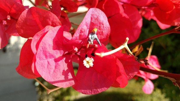 Miniature Figures, Blossom, Bloom, Flower, Red, Macro