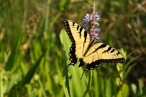 Butterfly, Pollen, Nature