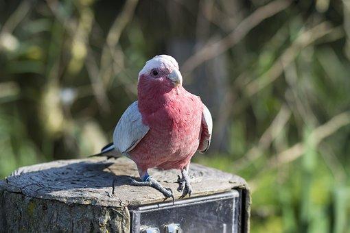 Bird, Parrot, Fauna, Small Parrot, Parakeet, Animal