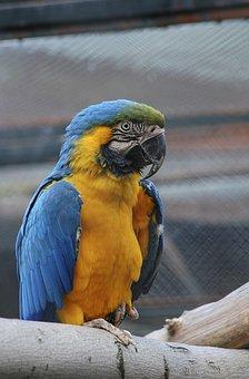 Fauna, Birds, Parrot