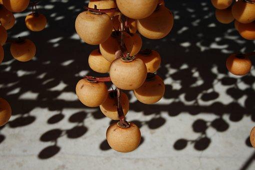Persimmon, Dried Persimmon, Fruit, Autumn